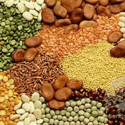 Indian grains
